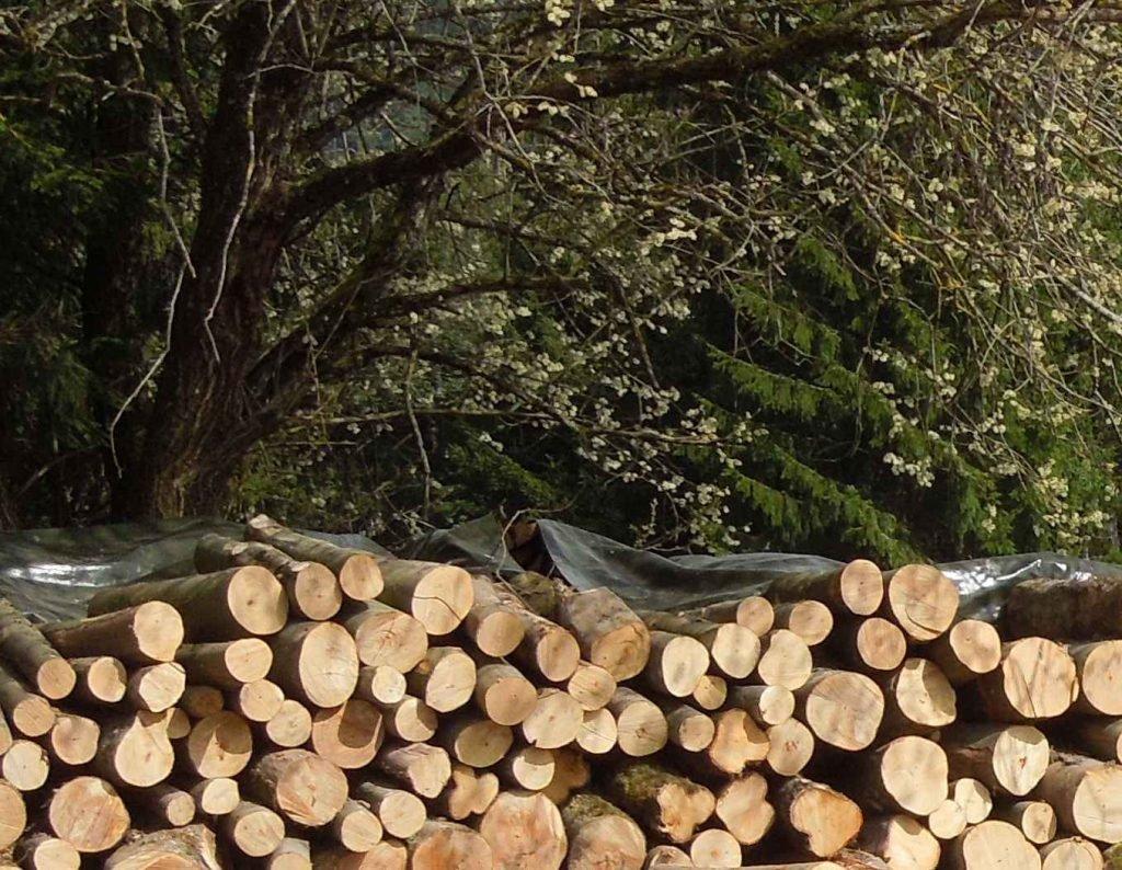 Holz aus Leinstetten