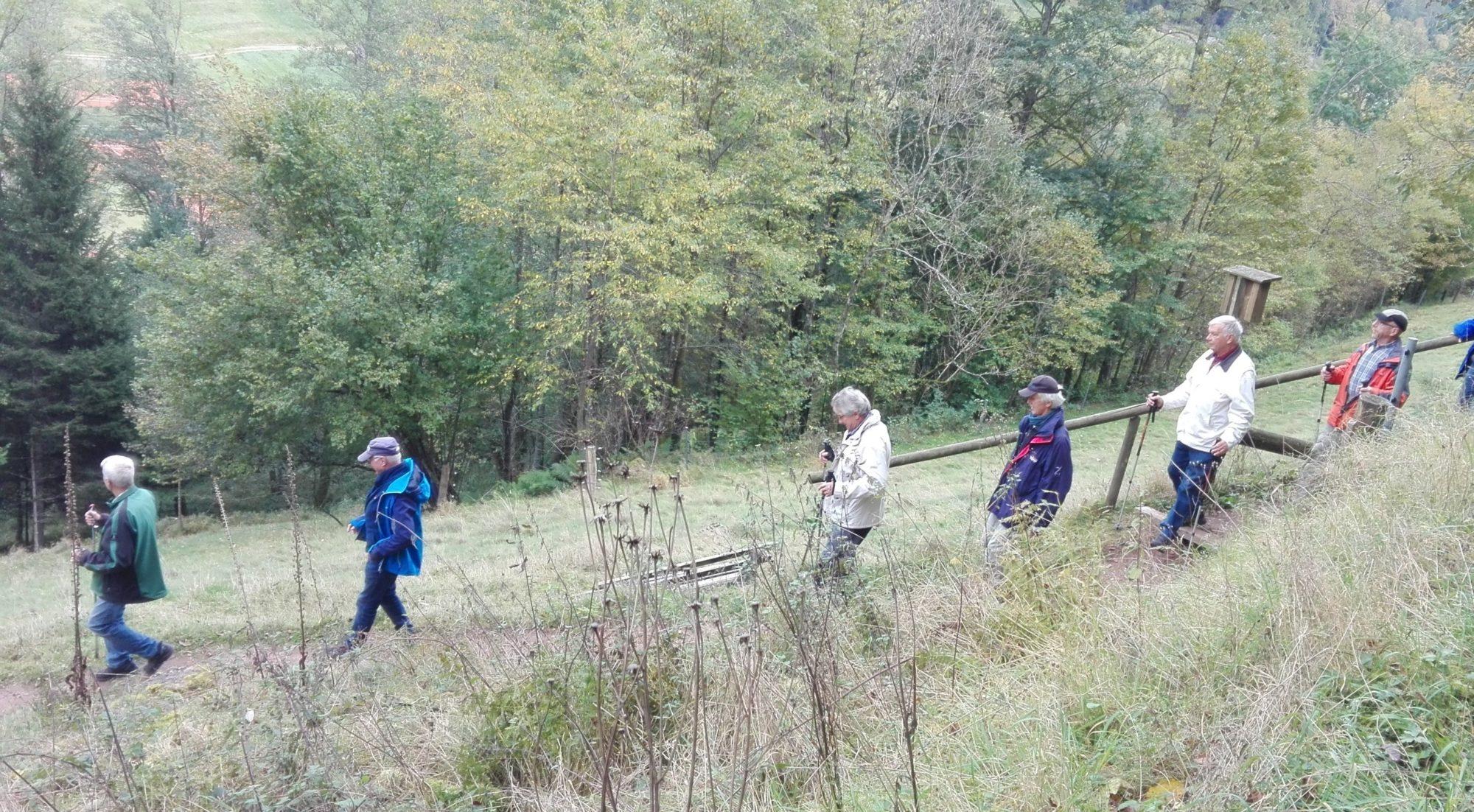 Unterwegs im Tonbachtal